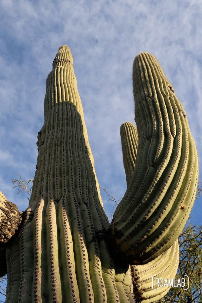 "We were informed that the saguaro cactus is pronounced with a silent ""g"" but we don't find that to be as fun to say. The poor ""g"" deserves to be heard, just like all the other letters. I'm sure such policies really hurt ""g's"" feelings."
