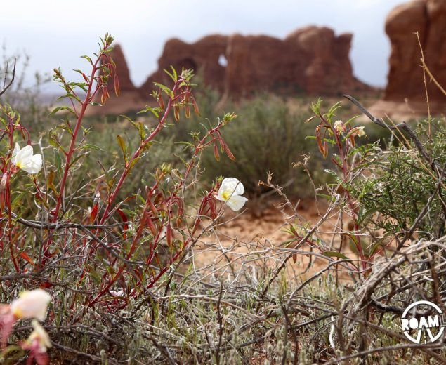 It's spring in Arches National Park. Even in a place with such limited water, flowers still grace the land.