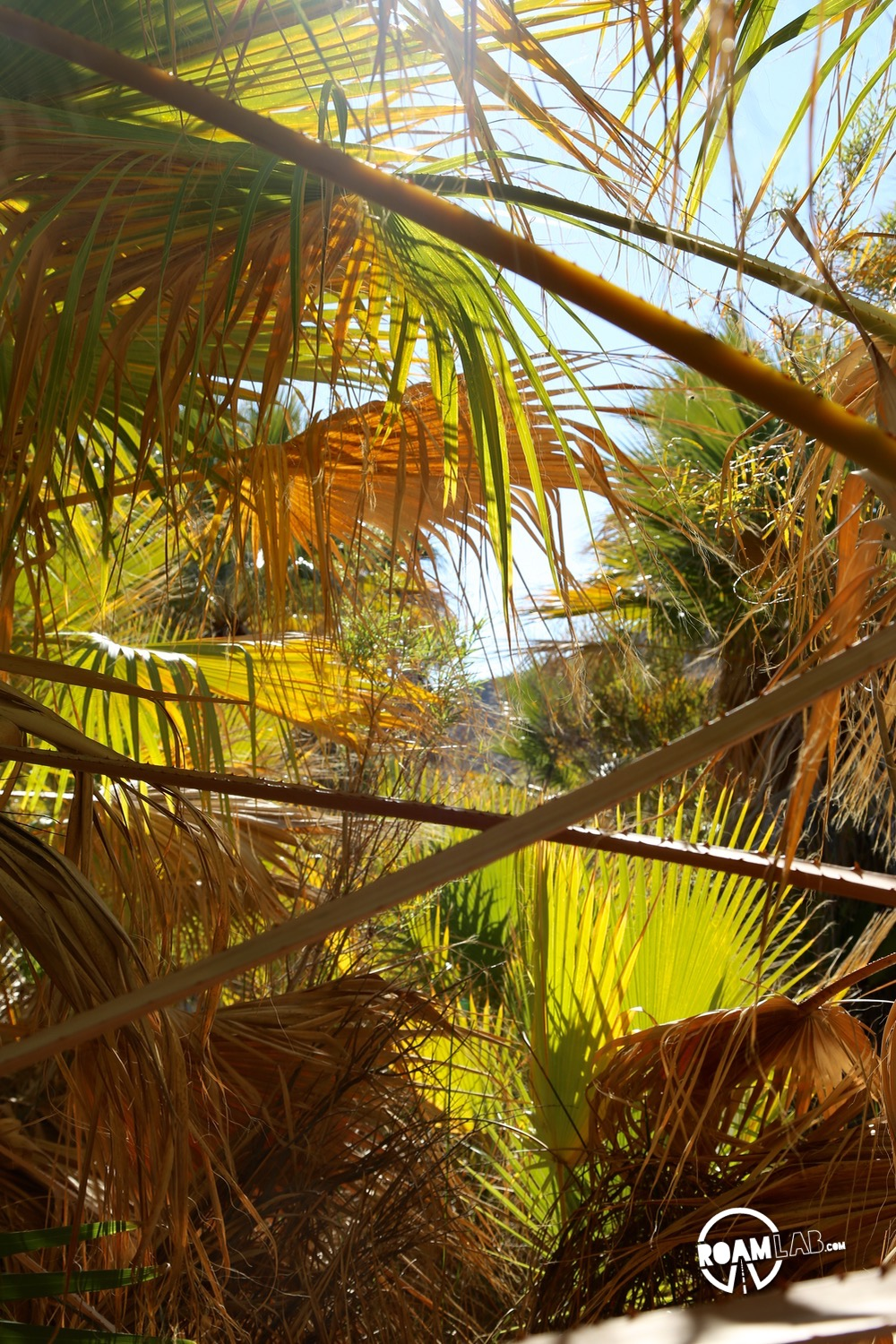 In the middle of the California desert is the Thousand Palms Oasis.