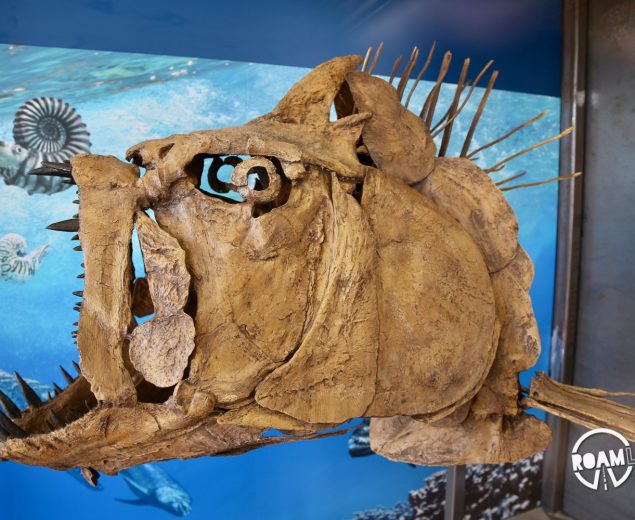 There is a brand new fossil exhibit in Big Bend National Park!