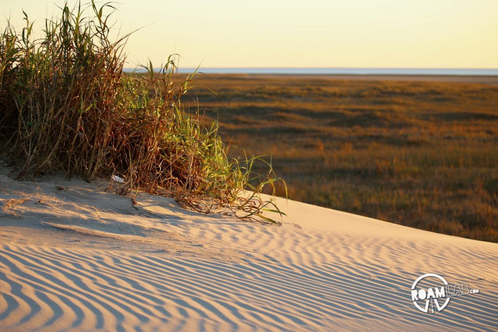 Very little of South Padre island is developed. The rest is rolling sand dunes for the crabs and clams and birds.