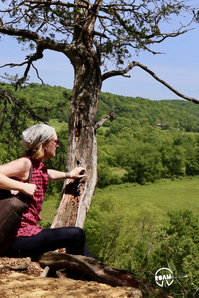 Harpeth River State Park is composed of an archipelago of public islands in a sea of private land. Hiking to the top of the Harpeth River Narrows reveals miles of emerald green farm land as far as the eye can see.