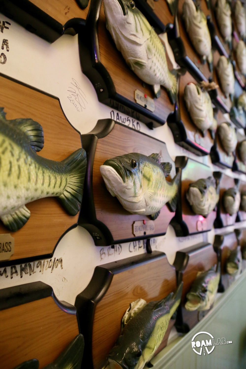Billy Bass Adoption Center