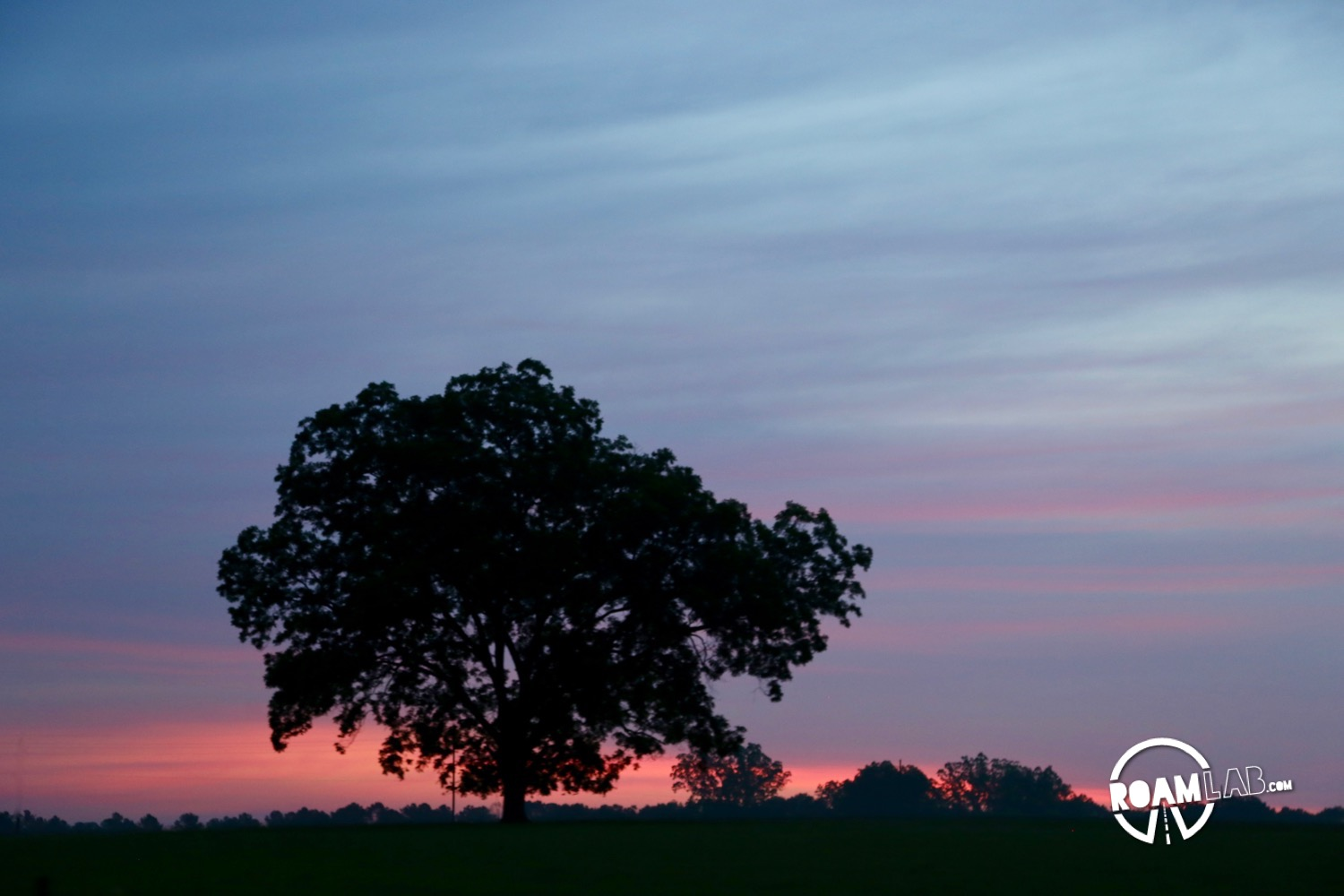Lone tree backlit by a blue and purple sunset