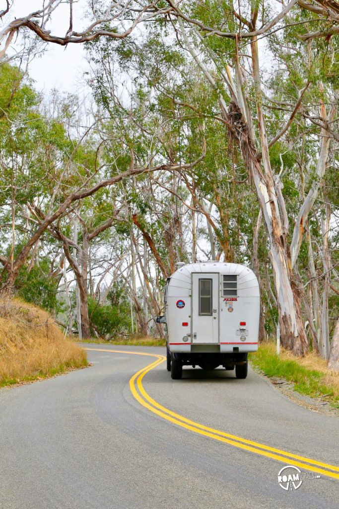 Driving through a eucalyptus forest in Montaña de Oro State Park