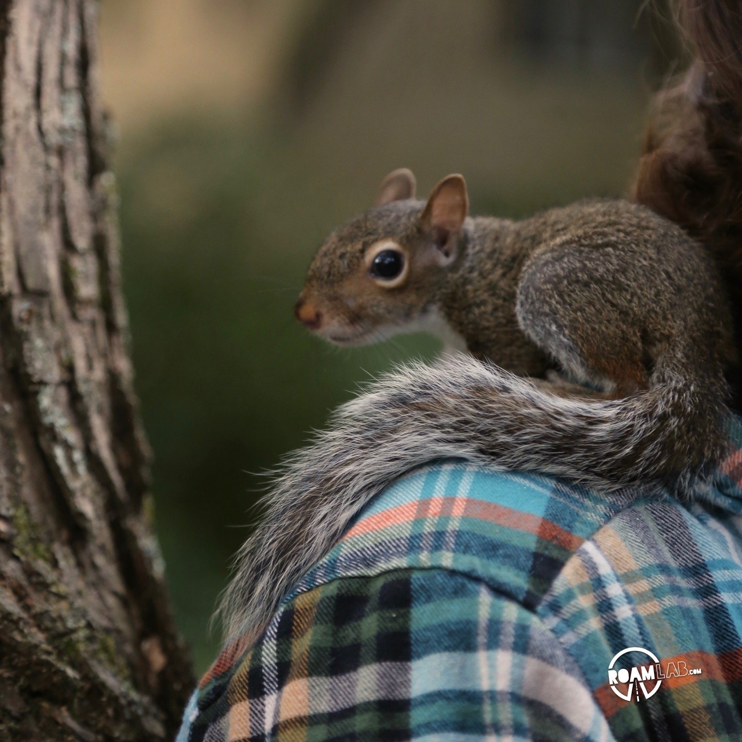 A lot of people have asked us about how we got so close to the cute couple of squirrels that have been showing up a lot on our Instagram Feed. In this 5 step series, I'll tell the tale of Tenzing, Hillary, Cowboy, and myself and the rollercoaster of experiences from rehabilitation to release.