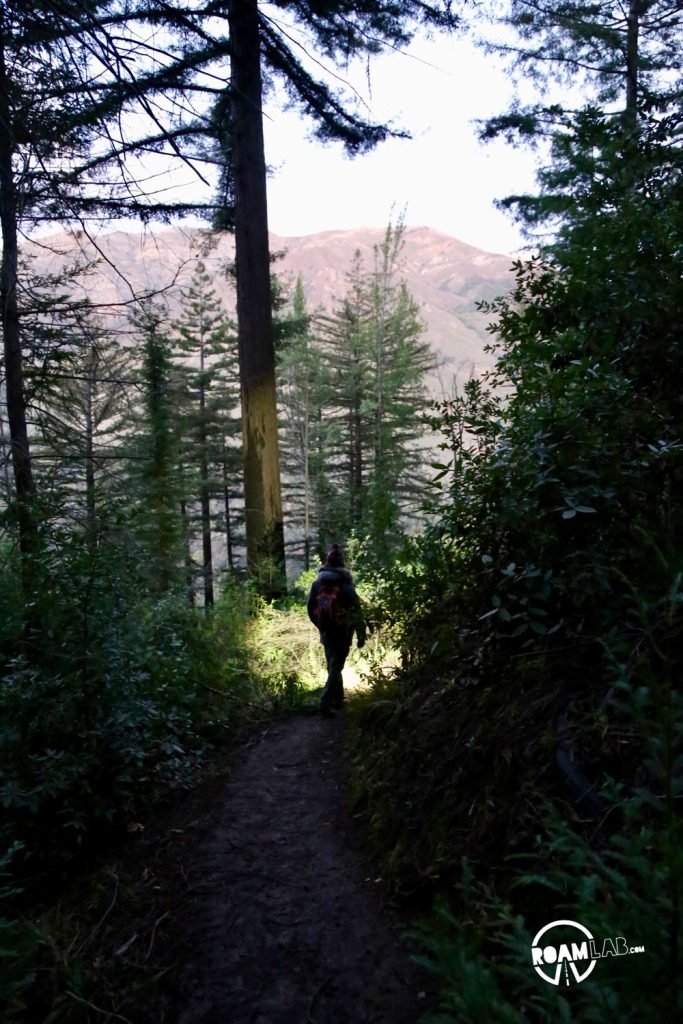 Buzzard's Roost hiking trail is a 3-mile loop trail following the Big Sur River, up shady redwood slopes, for brilliant sunset views of the Pacific Ocean.