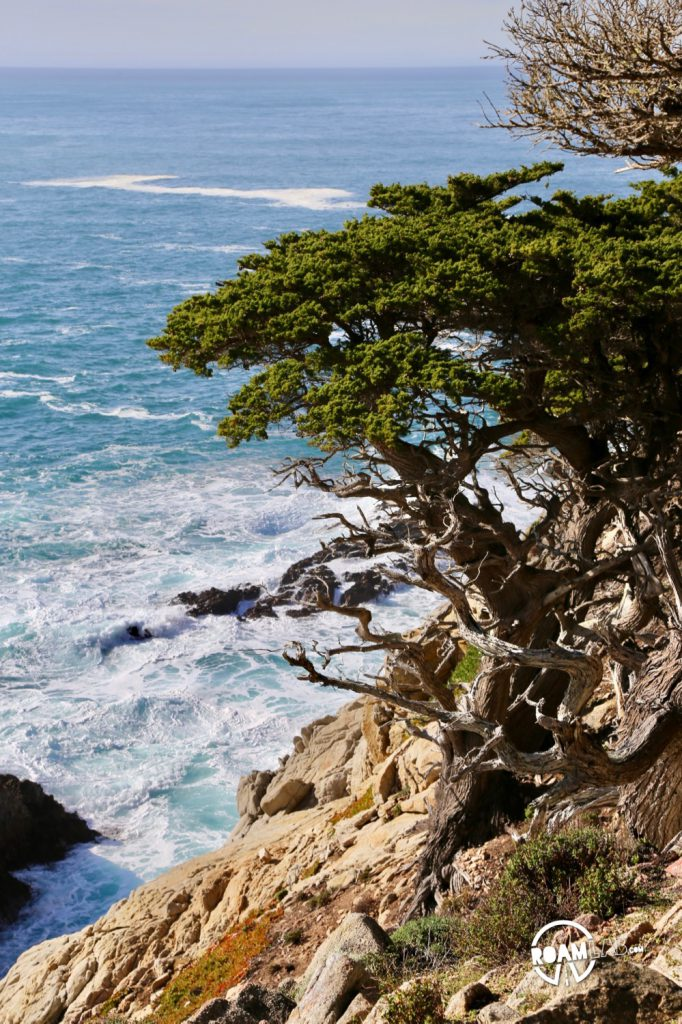 See whales, sea otters, sea lions, harbor seals, pelicans, herons, egrets, and all Point Lobos State Natural Reserve offers in an ultimate 5-mile hike.