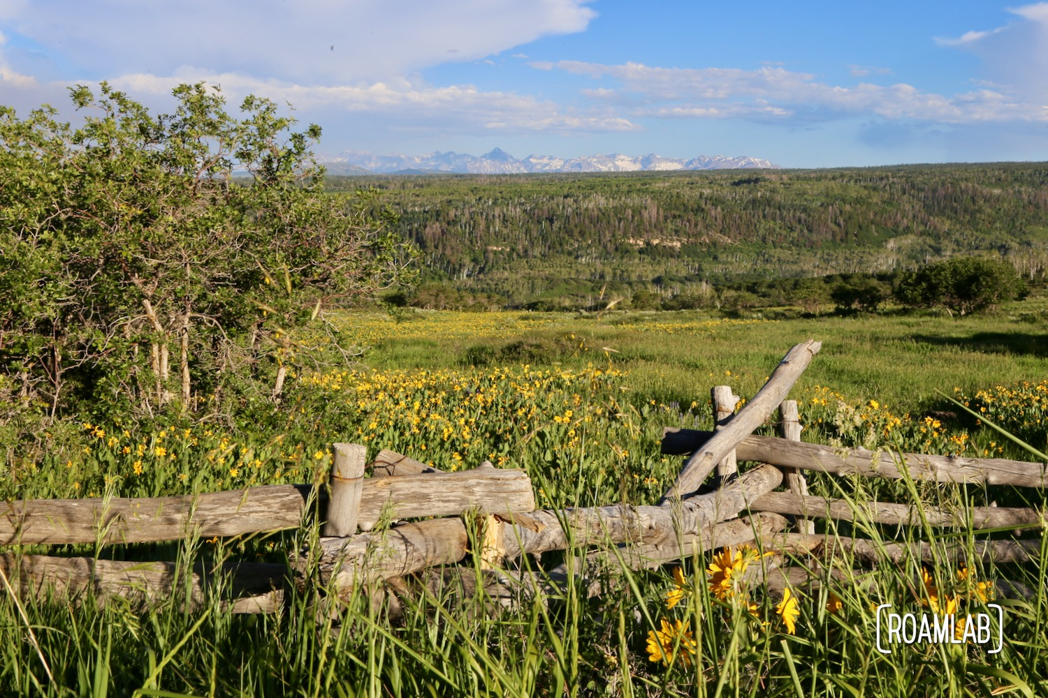 Fantastic wildflower views just outside of Montrose, Colorado