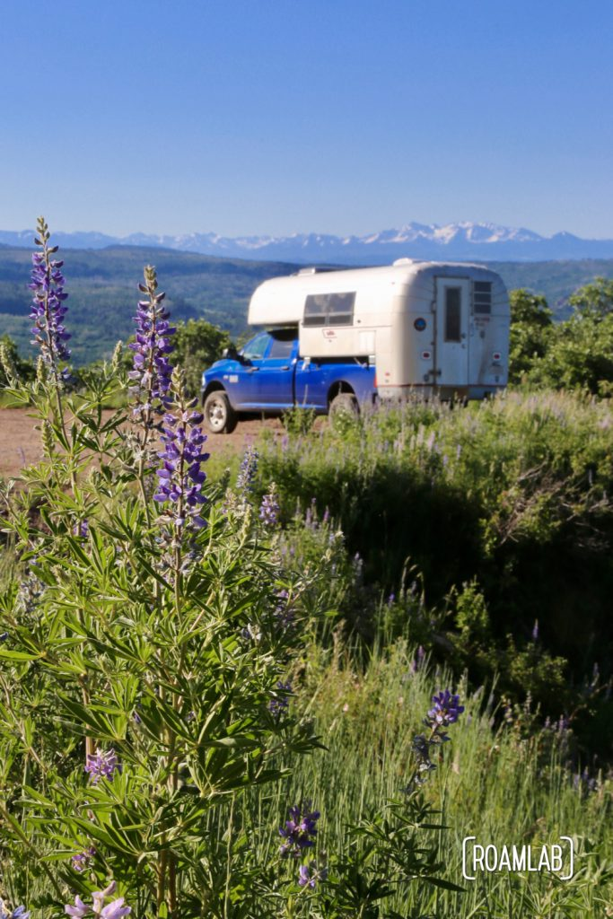 We start to get a sense of the dramatic vistas that will typify the Rimrocker Trail: it's all wildflowers and distant mountains.