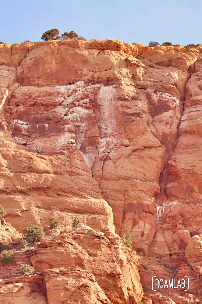 Condors collecting on the edge of the Vermillion Cliffs National Monument.