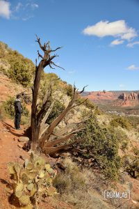 Man standing by an old gnarled tree on Airport Loop Trail looking out over Sedona, Arizona.