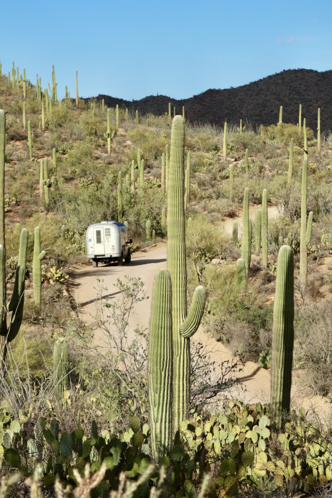 1970 Avion C11 truck camper driving down a narrow dirt road surrounded by cactus covered hillsides with mountains in the background at Saguaro National Park.