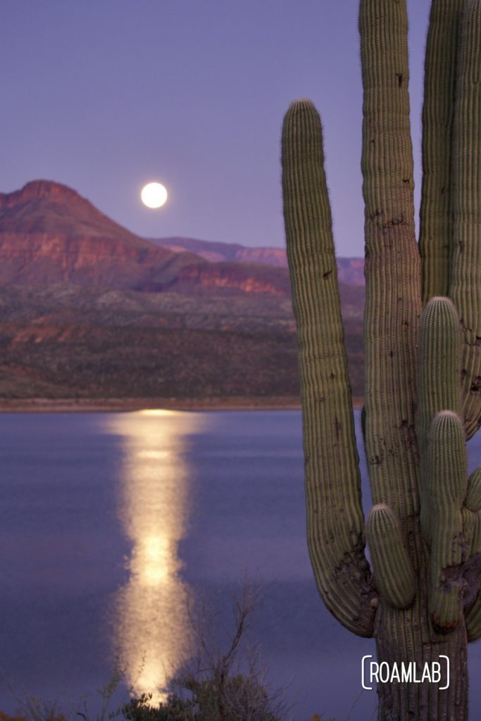 Full moon rising over Roosevelt Lake with a saguaro cactus.