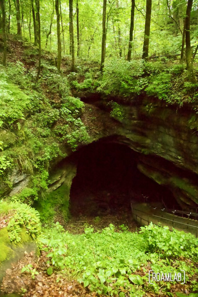 Lush green flora surrounding the depression into the historic entrance to the Mammoth Cave.